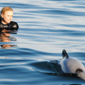 A tourist swimming with a Hector's Dolphin on a Black Cat Cruises tour.