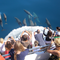 Birds eye view of tourists watching dolphins with the Auckland Whale and Dolphin Safari.